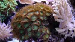 Besatz im Aquarium Meerwasseraquarium