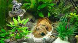 Dekoration im Aquarium Kleine Unterwasserwelt