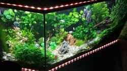 Aquarium Kleine Unterwasserwelt