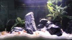 Aquarium Becken 25837