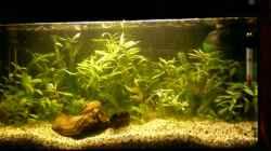 Aquarium 07.05.13