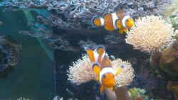 Besatz im Aquarium Becken 25974