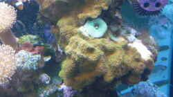 Pflanzen im Aquarium Becken 25974