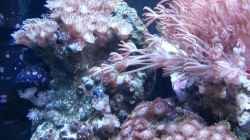 Besatz im Aquarium My first Reef