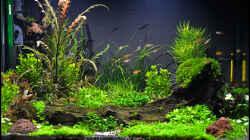 Besatz im Aquarium Allerlei Kleinbleibendes