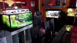 Blick auf Little Dschungel,Vision190 und Woha-Cube