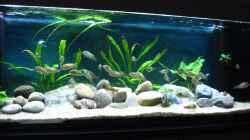 Aquarium Becken 26227