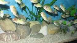 Besatz im Aquarium Becken 26227