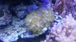 Aquarium 60 Liter Nanocube
