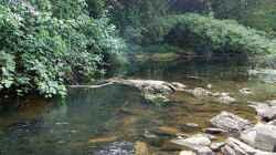 So sieht es bei Mundemba aus , dort kommen Benitochromis ufermanni vor , mit freundlicher