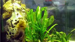 Aquarium Becken 264