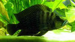 Besatz im Aquarium Becken 264
