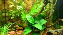 Aquarium Lido 120 - nur noch als Beispiel