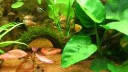 Besatz im Aquarium Lido 120 - nur noch als Beispiel
