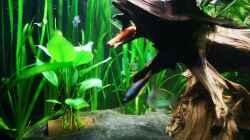 Aquarium Mein 1050er