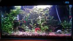 Aquarium Becken 26522