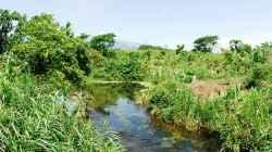 Menja River über Wasser , Bild mit freundlicher Genehmigung von Michel Keijman