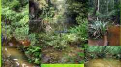 Der natuerliche Lebensraum des Keilfleckbaerblings