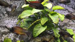 Pflanzen im Aquarium Becken 268
