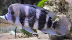 Besatz im Aquarium Becken 268