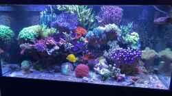 Aquarium 430l Riff mit Glasschrank