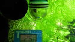 Dauertest und Thermometer