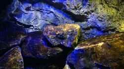 Aquarium Mbunas World