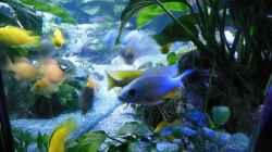 Labidochromis kakusa