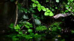 Pflanzen im Aquarium African Falls