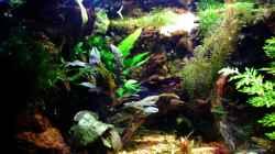 Besatz im Aquarium tercera conca