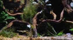 Aquarium tercera conca