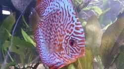 Besatz im Aquarium Becken 27455 (nur noch als Beispiel)
