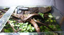 Dekoration im Aquarium Becken 27455 (nur noch als Beispiel)