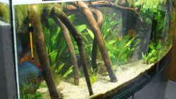 Aquarium Becken 27455 (nur noch als Beispiel)
