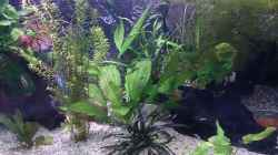 Pflanzen im Aquarium Becken 27455 (nur noch als Beispiel)