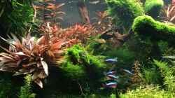 Aquarium 300er