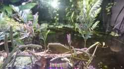 Aquarium Becken 27491