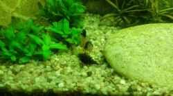 Besatz im Aquarium Rio 180