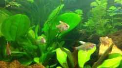 Besatz im Aquarium Südamerika