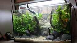 Aquarium Old but Gold aufgelöst