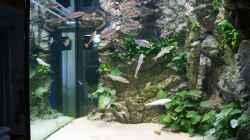 Aquarium Becken 27667