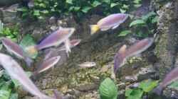 Besatz im Aquarium Becken 27667
