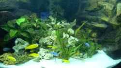 Aquarium Mbuna350 Trigon