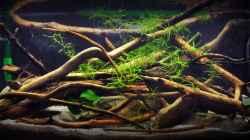 Aquarium Anlage mit 3 60 l Becken