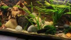 Das Aquarium im Eindruck der Länge nach fotografiert