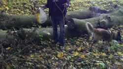 Laub sammeln im Wald;-)