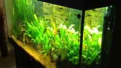 Aquarium Klassisches Gesellschaftsaquarium