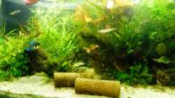 Dekoration im Aquarium Becken 27845