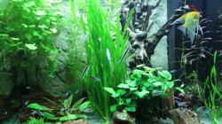 Aquarium Lido 200