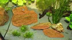 Pflanzen im Aquarium Lido 200